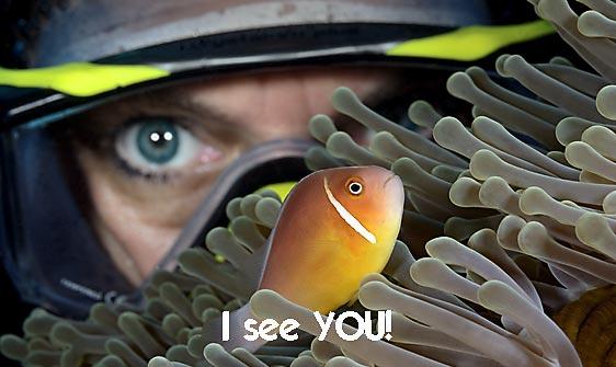 anemonefish_pink_sr_beqa_h_0089_fij0117_web.jpg