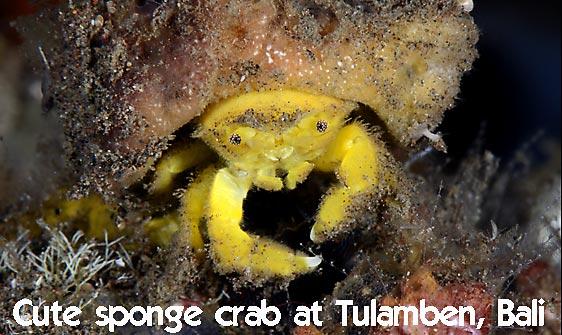 crab_sponge_shr_tam_h_0029_bal6402_web.jpg