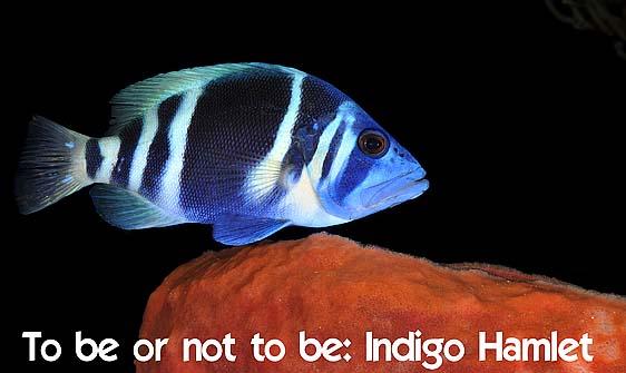 hamlet_indigo_lhr_roa_h_0072_uti2668_web.jpg