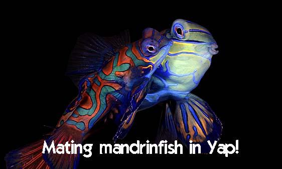 mandarinfish_rr_h_0040_yap0614_web.jpg