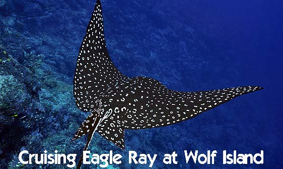 ray_eagle_wolf_h_0041_ecu0510_web.jpg