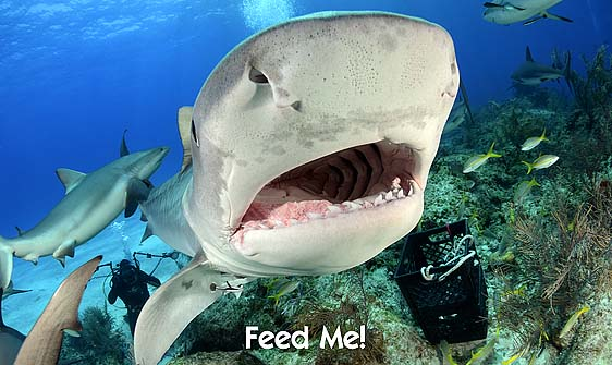 shark_tiger_ft_lbb_h_3492_bah4163_web.jpg