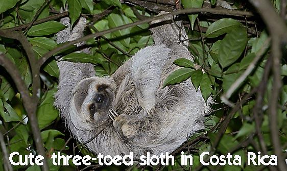 sloth_toed_three_map_h_0033_cos0228_web.jpg