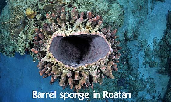 sponge_barrel_eg_roa_h_0242_uti4566_web.jpg