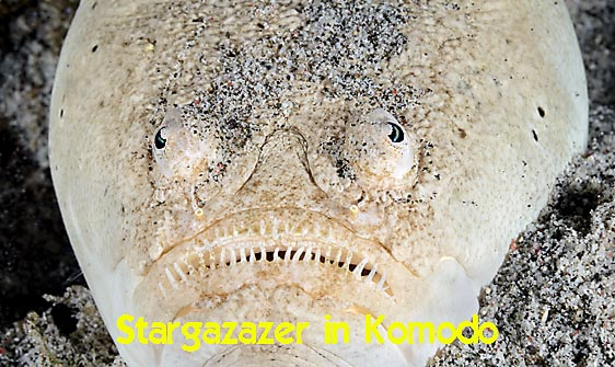 stargazer_whitemargin_c_gb_h_0076_kom0194_web.jpg