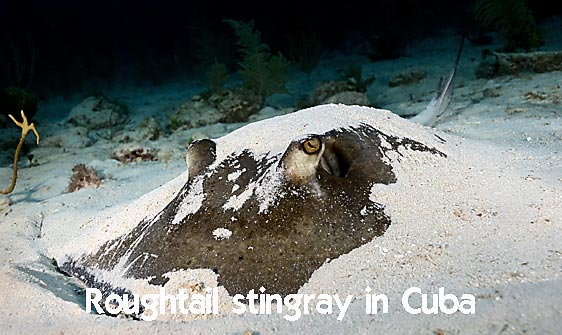 stingray_roughtail_lab_jar_h_0046_cub0480_web.jpg