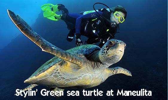 turtle_green_manout_ci_h_0082_cos1281_web.jpg