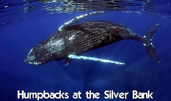 whale_humpback_sb_h_0437_dom0444_web.jpg