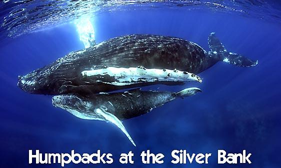 whale_humpback_sb_h_0445_dom0452_web.jpg