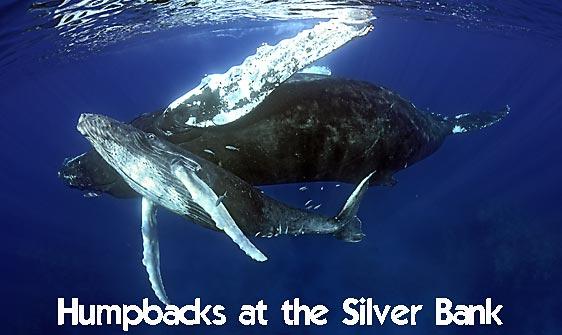 whale_humpback_sb_h_0448_dom0455_web.jpg