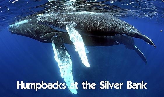whale_humpback_sb_h_1291_dom1298_web.jpg