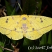 moth_ph_h_0019_cos2314.jpg