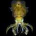 squid_reef_bigfin_bb_v_1377_alo3466.jpg