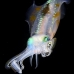 squid_reef_bigfin_pp_v_0088_alo0239.jpg