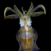 squid_reef_bigfin_pp_v_0121_alo0272.jpg