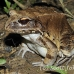 frog_jungle_smoky_la_h_0512_ecu1237.jpg