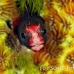 blenny_barnacle_pej_ci_h_0015_cos0560.jpg