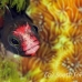 blenny_barnacle_pej_ci_h_0016_cos0561.jpg