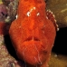 frogfish_manch_ci_v_0023_cos1492.jpg