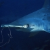 shark_hammerhead_scalloped_ci_h_0059_cr.jpg