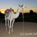 camel_bank_west_lux_h_0017_egy3099.jpg