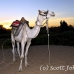 camel_bank_west_lux_h_0018_egy3100.jpg