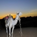 camel_bank_west_lux_v_0010_egy3088.jpg