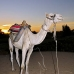camel_bank_west_lux_v_0014_egy3092.jpg
