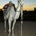 camel_bank_west_lux_v_0016_egy3098.jpg