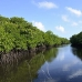 mangroves_channel_german_v_0084_yap0427.jpg